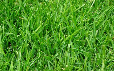Rullegræs er genvejen til en smuk græsplæne